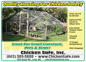 Do you wake up every morning wondering if you have had a predator attack? www.chickensafe.com
