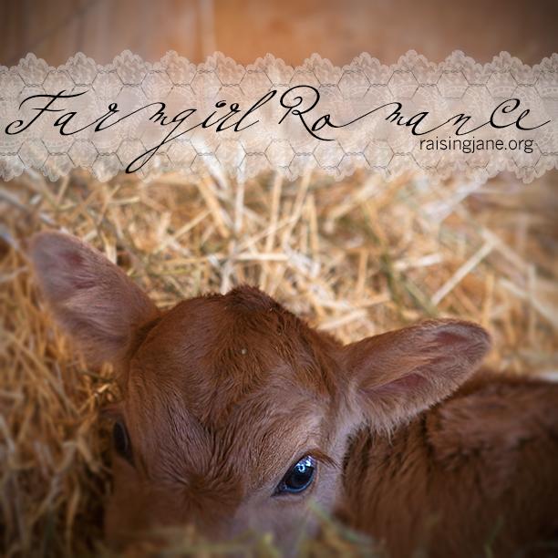farm_romance-217029