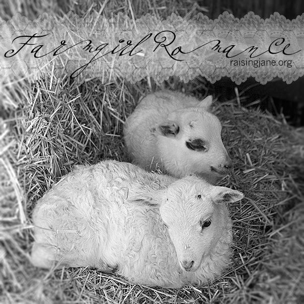 farm_romance-6979