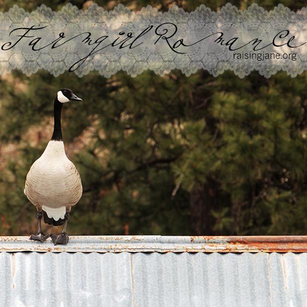 farm_romance-0874