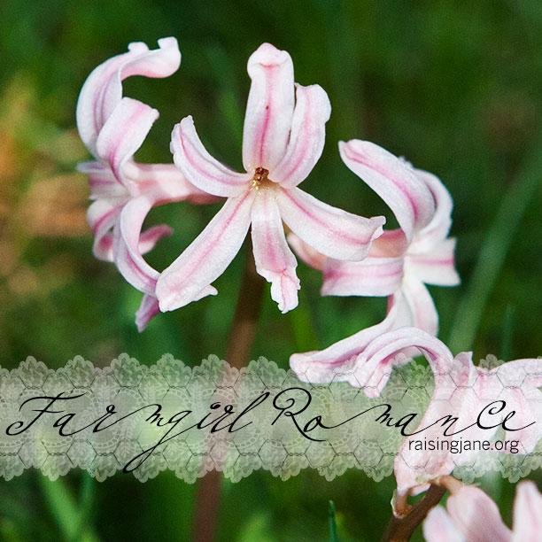 farm_romance-1732