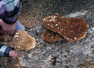 gift_gab-honeybee_tree-5066