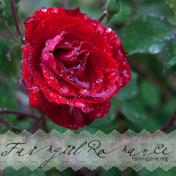farm_romance-3285