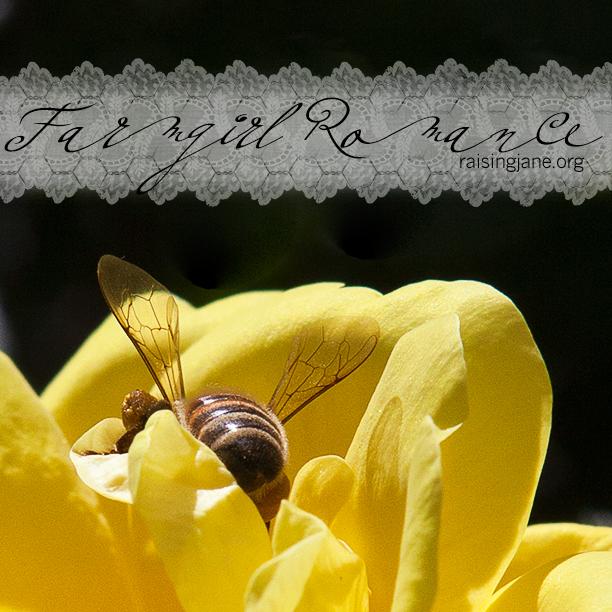 farm_romance-9263