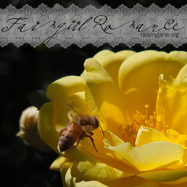 farm_romance-9269