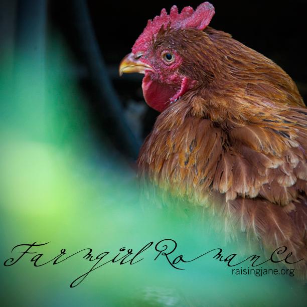 farm_romance-215920