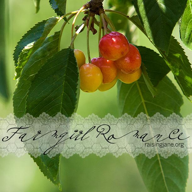 farm_romance-6077