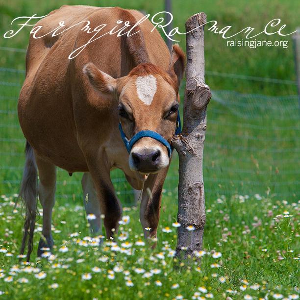 farm_romance-6098
