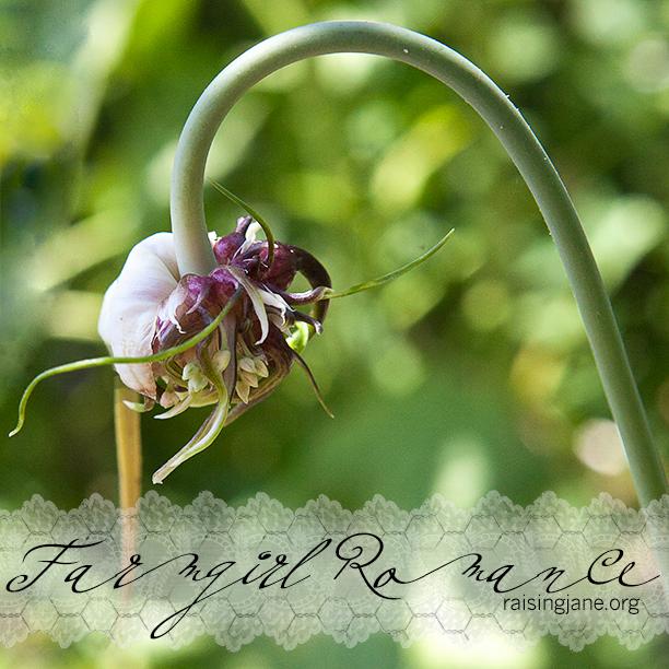 farm_romance-8679