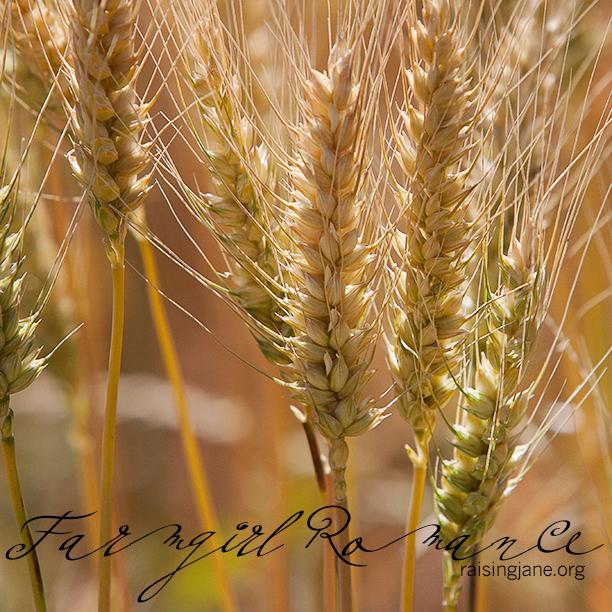 farm_romance-9735