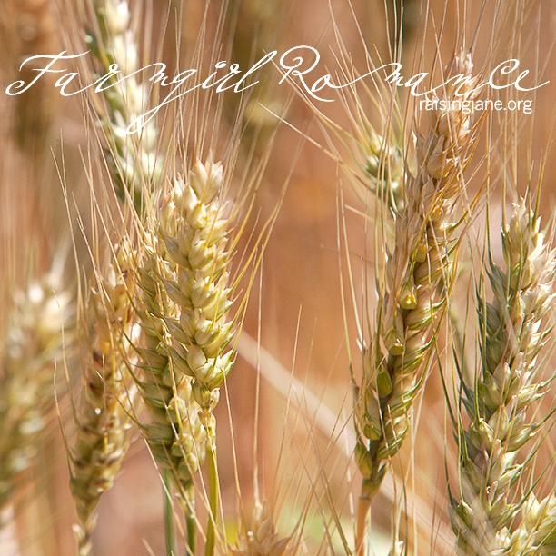farm_romance-9751