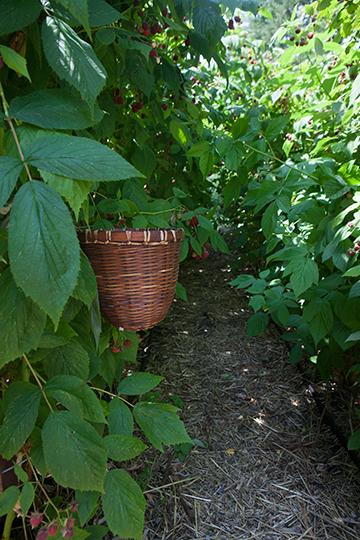 giveaway-marvins-garden-6970