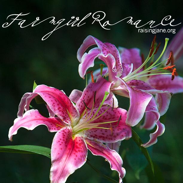 farm_romance-7884