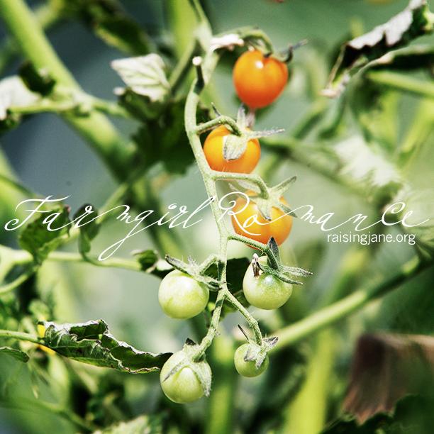 farm_romance-8534