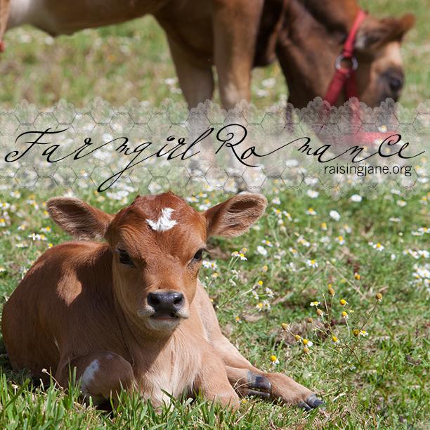 farm_romance-9413
