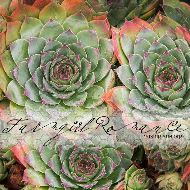 farm_romance-0583