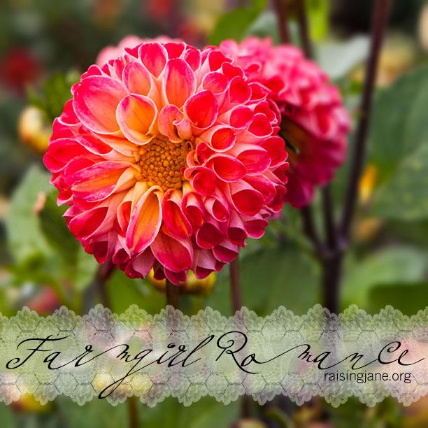 farm_romance-0734