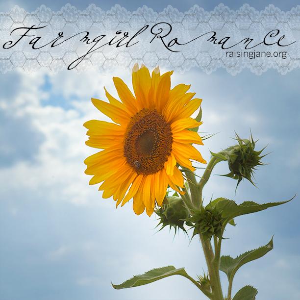 farm_romance-9715