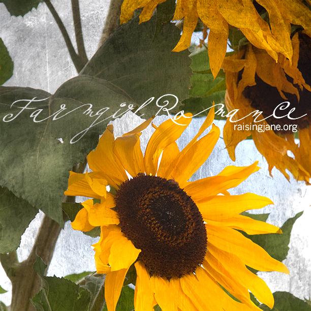 farm_romance-9725