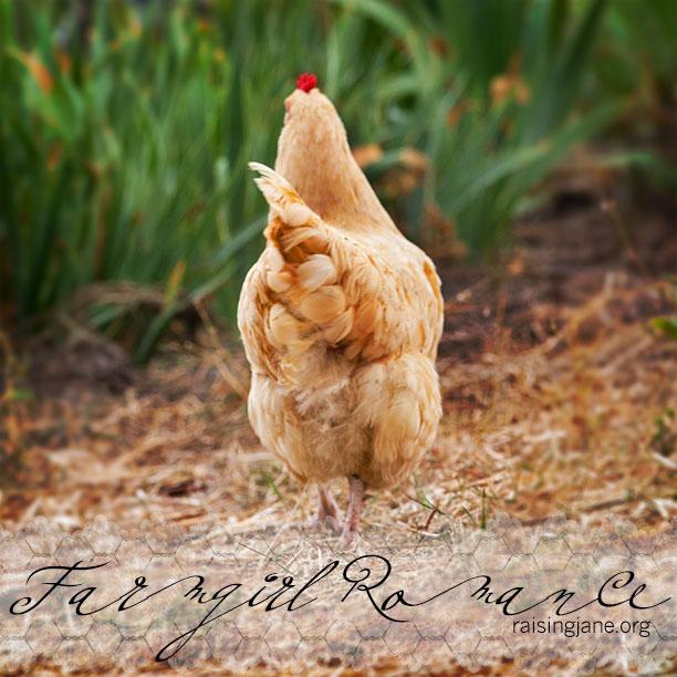 farm_romance-9917