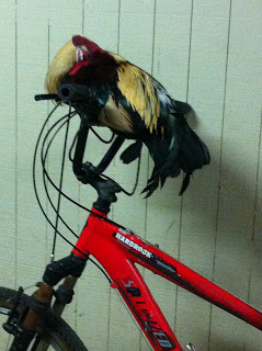 gift_gab-rooster_rides_bike-1247