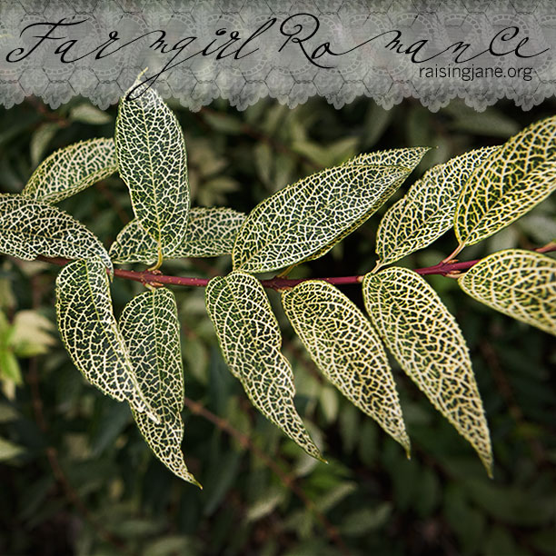 farm_romance-0783