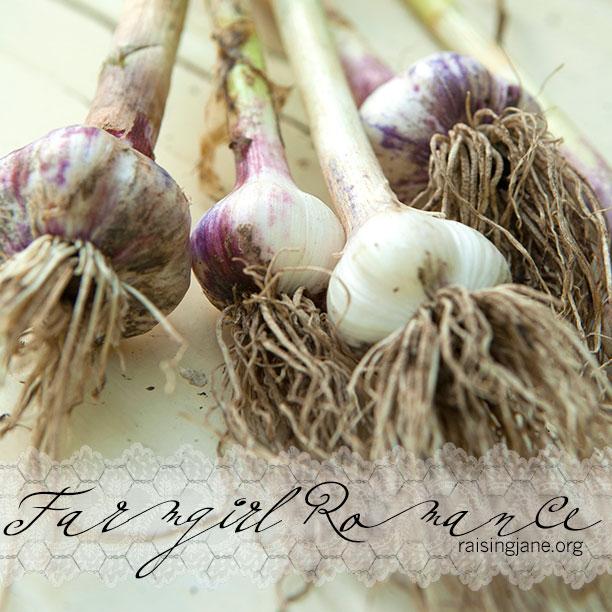 farm_romance-5282