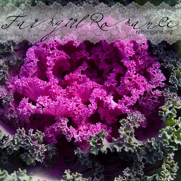farm_romance-cabbage