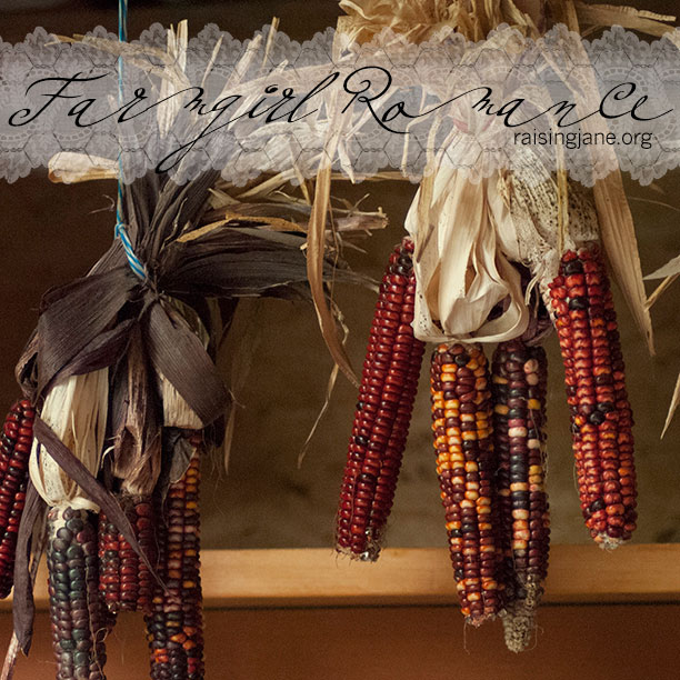 farm_romance-corn