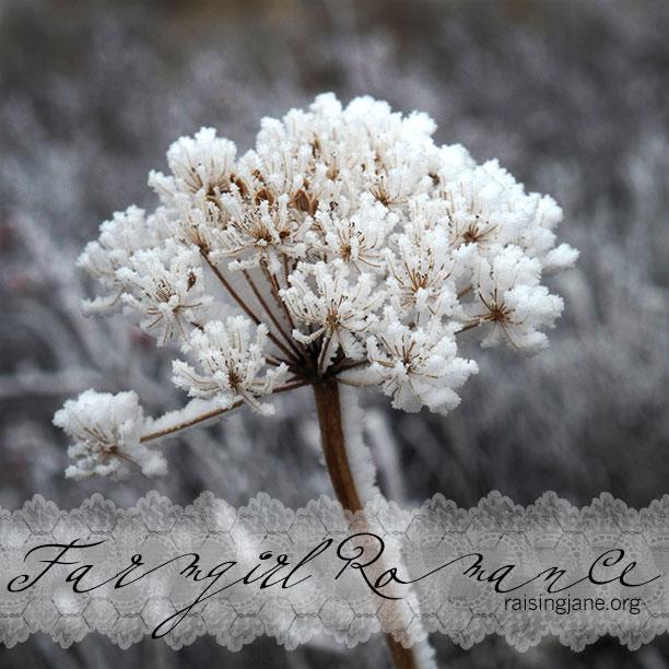 farm_romance-9673
