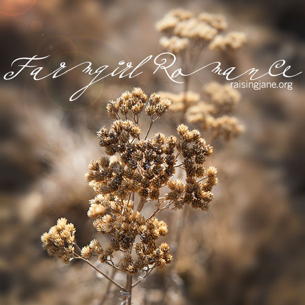 farm_romance-3003