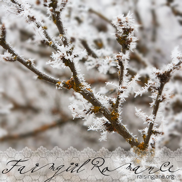 farm_romance-4222