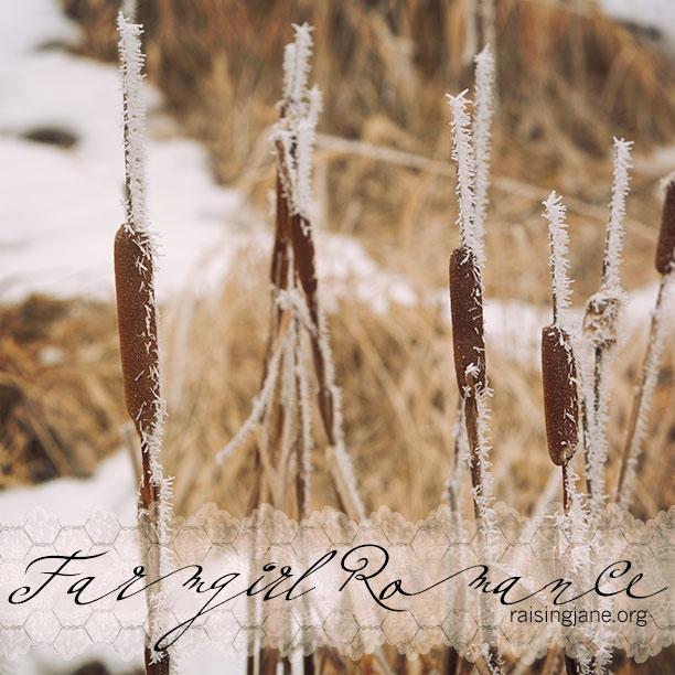 farm_romance-4263