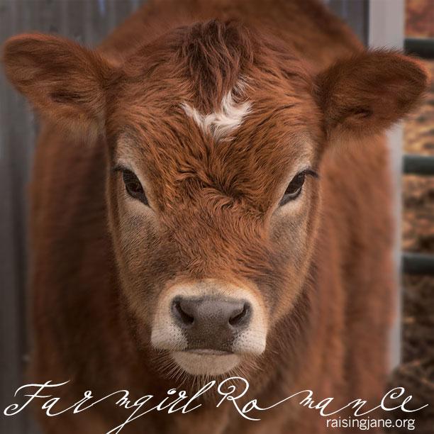 farm_romance-5580
