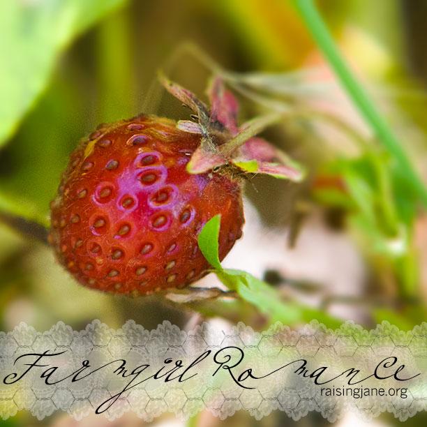 farm_romance-6240