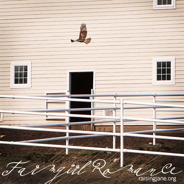 farm_romance-7170