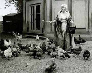 chickpostcrd1