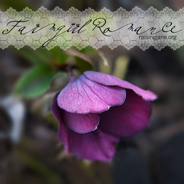 farm_romance-8903