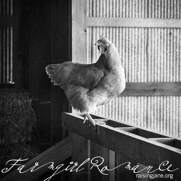 farm_romance-9841