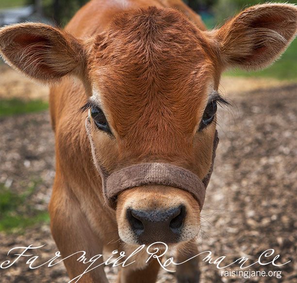farm_romance-2109
