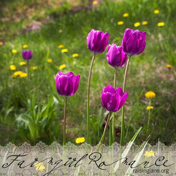 farm_romance-2161