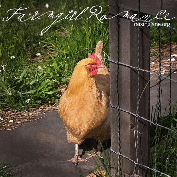 farm_romance-2271