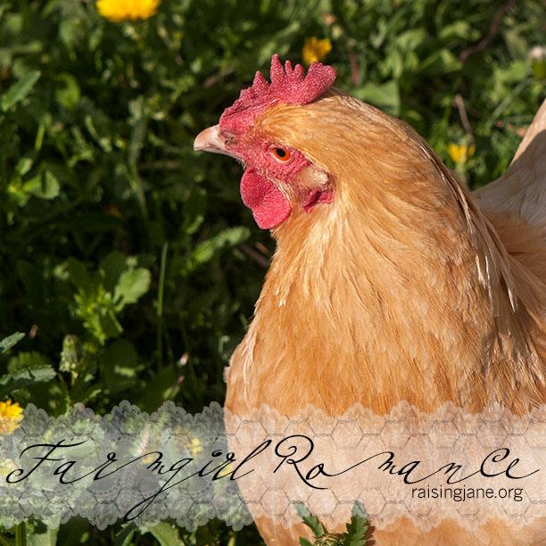 farm_romance-2273