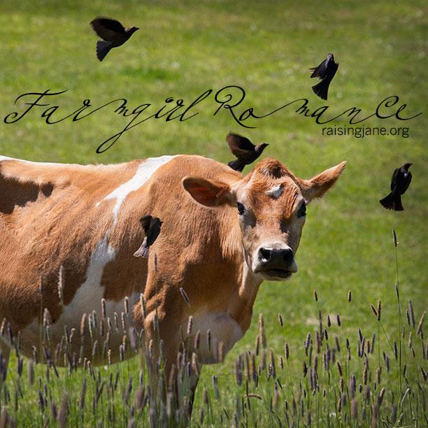 farm_romance-2684