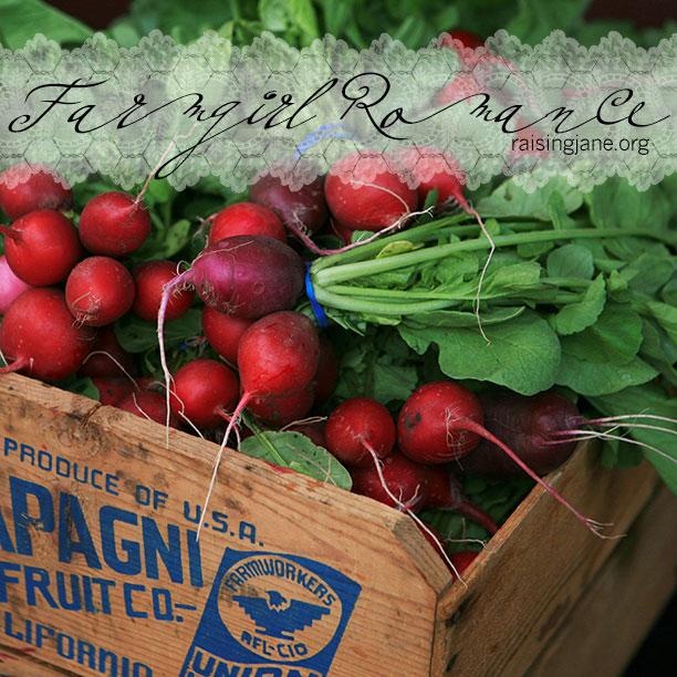 farm_romance-radishes