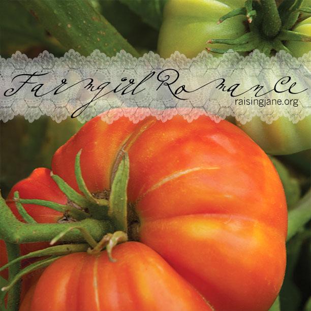 farm_romance-tomatoes2