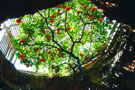 underground_tree