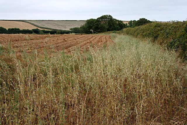 Cropland_-_geograph.org.uk_-_213877