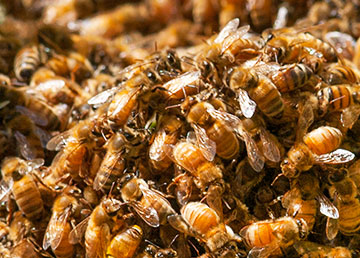 bees-2_3307