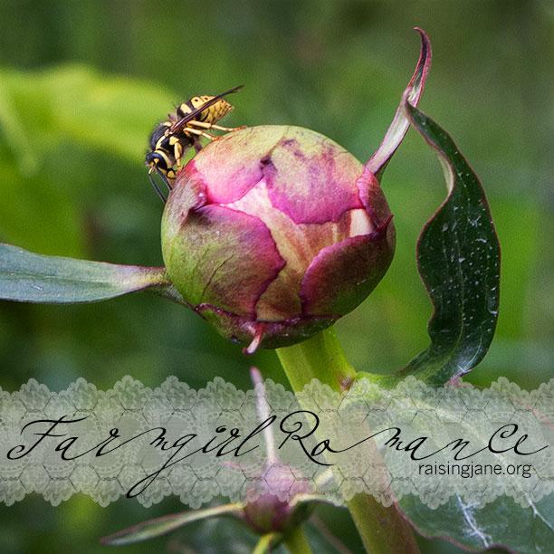 farm_romance-3260
